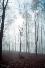 luana's land romanian forest fog