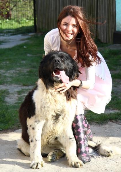 Bucovina shepherd dog Romania eastern europe sheperd dogs