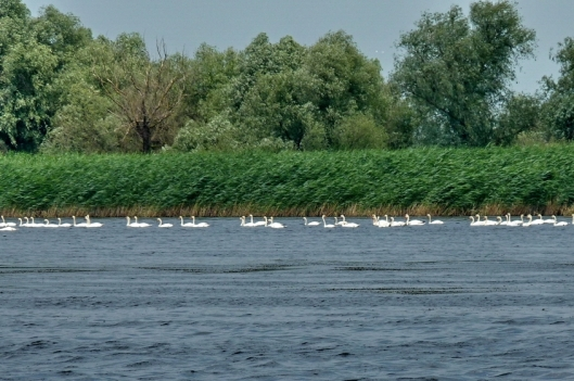 Danube Delta Romania Black Sea Delta Dunarii 13
